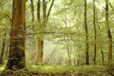 Осень – многоцветная царица… Волшебные фотопейзажи Ларса Ван де Гур — фото 34