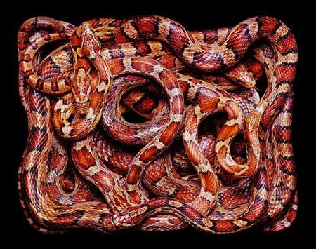 Гвидо Мокафико (Guido Mocafico) - Повелитель змей — фото 15