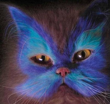 Что такое котопейнт, или «Раскрась кота!» — фото 3