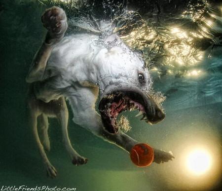 Мокрые и смешные – фото ныряющих собак Сета Кастила — фото 6