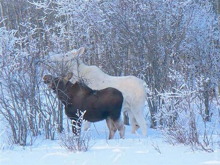 Белые люди и животные — фото 43