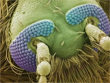 Лицо… комара. Ужас какой )