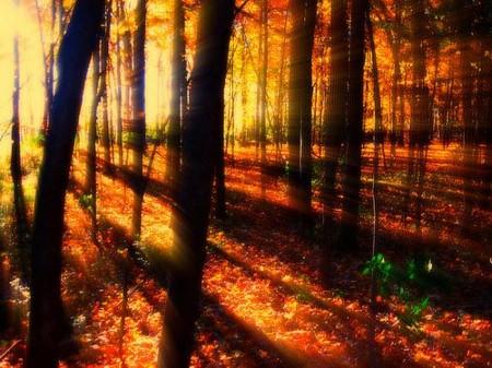 """У меня в голове одна фраза (из песни) — """"Осень. Люблю. Осень золотая — как мне не любить тебя"""""""