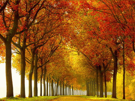 Осень – многоцветная царица… Волшебные фотопейзажи Ларса Ван де Гур — фото 10
