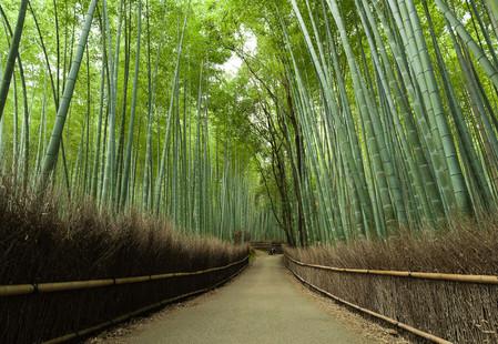 Япония, Киото, бамбуковая роща, красиво … — фото 14
