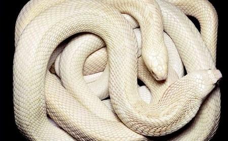 Белые люди и животные — фото 34