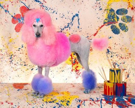 Собачий арт в работах Рена Низерленда — фото 22
