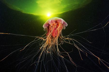 Подводные фотоэксперименты Александра Семенова — фото 11