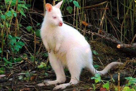 Белые люди и животные — фото 42
