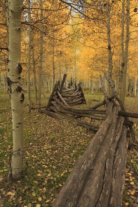 Осень умеет уходить красиво. 55 причин полюбить осень — фото 42
