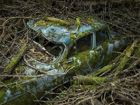 Парковка в раю – работы Питера Липпмана — фото 7