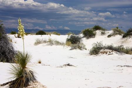 Белая жара в пустыне White Sands National Monument — фото 15