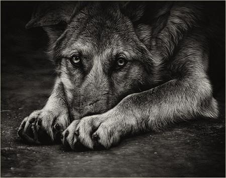 Картины в технике скрэтчборд от Кристины Пенеску — фото 21