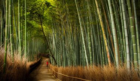 Япония, Киото, бамбуковая роща, красиво … — фото 16