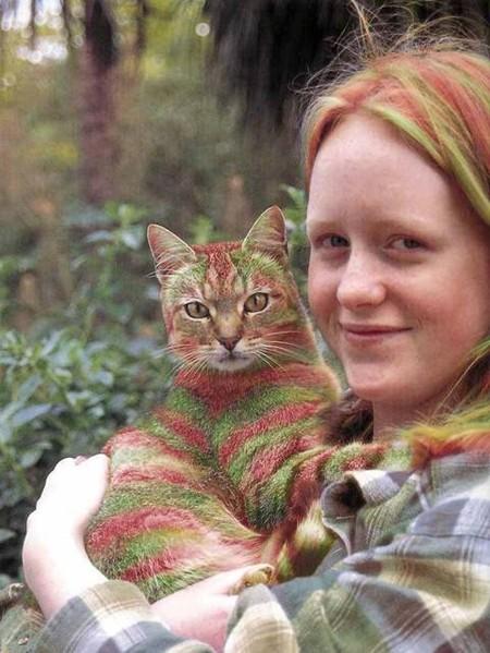 Что такое котопейнт, или «Раскрась кота!» — фото 25