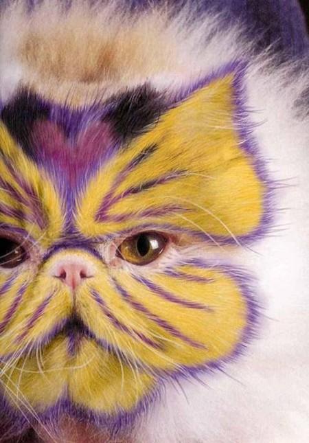 Что такое котопейнт, или «Раскрась кота!» — фото 5