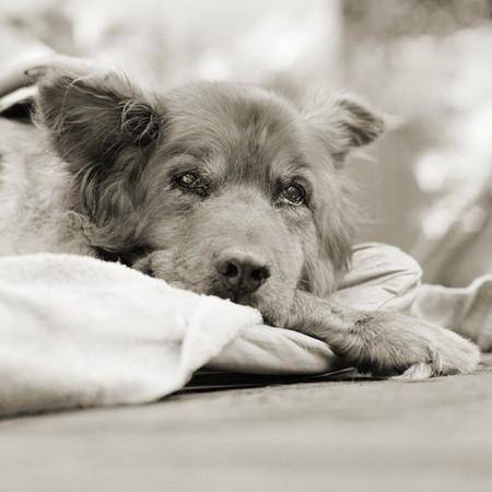 Фотографии пожилых животных от Исы Лешко — фото 5