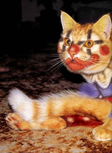 Кото-клоун, рыжий и яркий