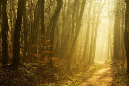 Осень – многоцветная царица… Волшебные фотопейзажи Ларса Ван де Гур — фото 18
