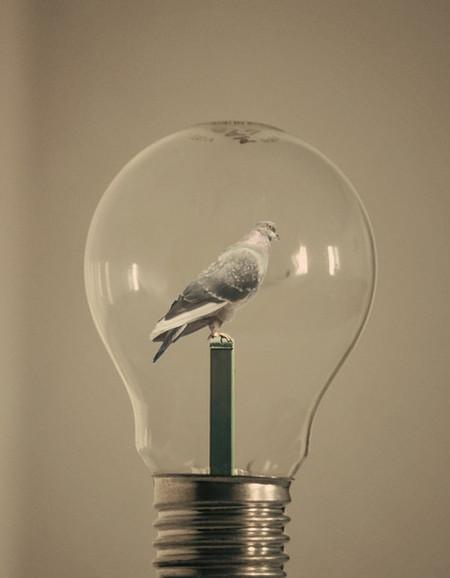 Волшебные лампочки на фотографиях Адриана Лимани — фото 7