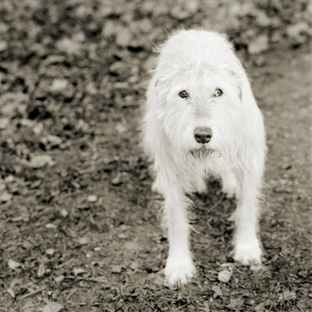 Фотографии пожилых животных от Исы Лешко — фото 4