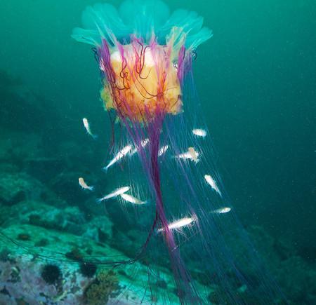 Подводные фотоэксперименты Александра Семенова — фото 23