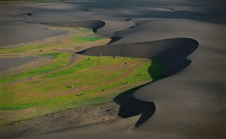 Чили, дюны, пастбище, коровы