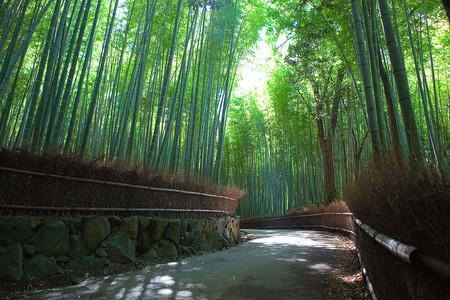 Япония, Киото, бамбуковая роща, красиво … — фото 18