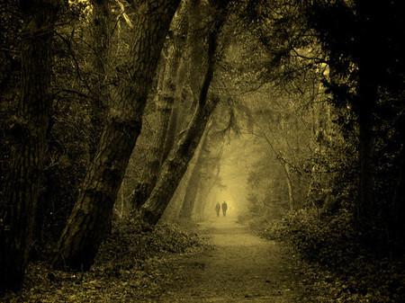 Осень – многоцветная царица… Волшебные фотопейзажи Ларса Ван де Гур — фото 30