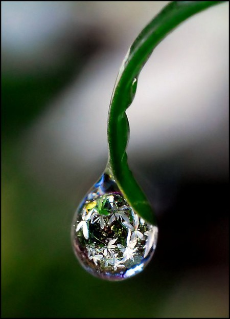 Целый мир внутри капли – фотографии Стива Уолла — фото 14