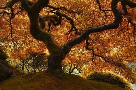 Осень умеет уходить красиво. 55 причин полюбить осень — фото 13