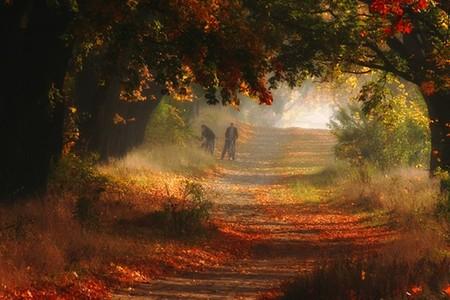 Осень умеет уходить красиво. 55 причин полюбить осень — фото 19