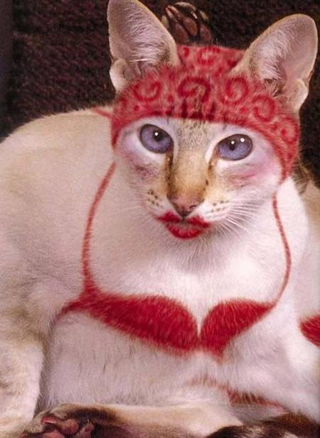 Что такое котопейнт, или «Раскрась кота!» — фото 26