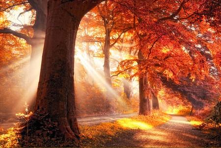 Осень – многоцветная царица… Волшебные фотопейзажи Ларса Ван де Гур — фото 8