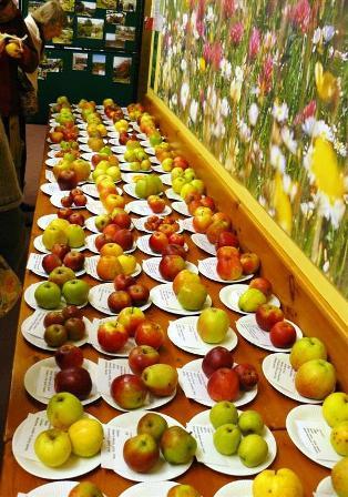 Apple Day в Англии – большой праздник здоровья для любителей яблок — фото 3