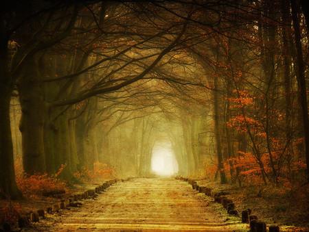 Осень – многоцветная царица… Волшебные фотопейзажи Ларса Ван де Гур — фото 21