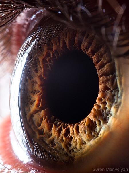 Глаза людей и животных – макроснимки Сурена Манвеляна — фото 20