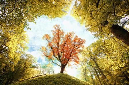 Осень – многоцветная царица… Волшебные фотопейзажи Ларса Ван де Гур — фото 2