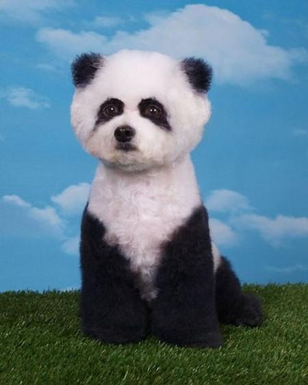 Снова панда)