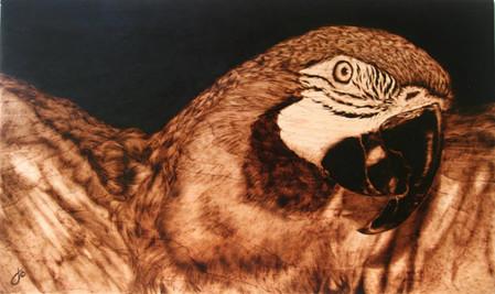 Пирография – горячая живопись Джулии Бендер — фото 14