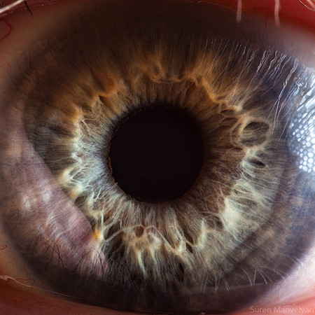 Глаза людей и животных – макроснимки Сурена Манвеляна — фото 25