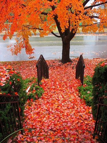 Осень умеет уходить красиво. 55 причин полюбить осень — фото 27