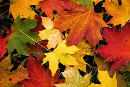 Осень умеет уходить красиво. 55 причин полюбить осень — фото 33