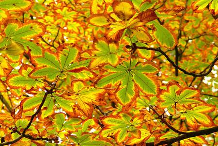 Осень – многоцветная царица… Волшебные фотопейзажи Ларса Ван де Гур — фото 16