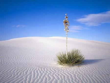 Белая жара в пустыне White Sands National Monument — фото 9