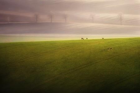 Туманные пейзажи на красивых снимках Богуслава Стремпеля — фото 23