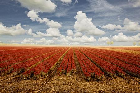 Осень – многоцветная царица… Волшебные фотопейзажи Ларса Ван де Гур — фото 25