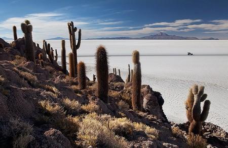 Интересный пейзаж. Кроме кактусов, здесь почти ничего не растет