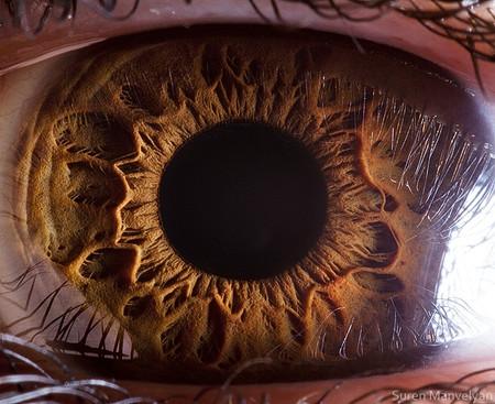 Глаза людей и животных – макроснимки Сурена Манвеляна — фото 22