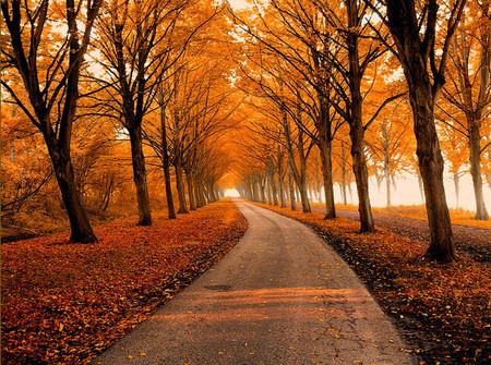 Осень – многоцветная царица… Волшебные фотопейзажи Ларса Ван де Гур — фото 13